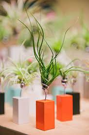 table top decoration ideas air plant display ideas and care tips small garden ideas