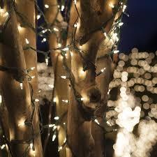 Christmas Lights Etc 100 Clear Mini Christmas Lights 6
