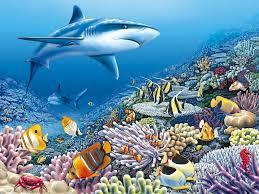 coral shark royce mcclure fant a sea pinterest shark