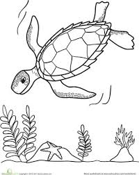 422 turtles tortoises images sea turtles