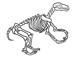 dinosaur skeleton of triceratops 40 skeleton coloring pages