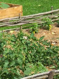 vegetable garden mulch dunneiv org