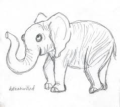 cute elephant drawing by deborah willard