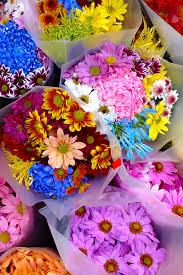 November Flowers File Flowers At Fruit Market On Queen Street Jpg Wikimedia Commons