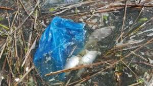 ornamental fish in plastic bag stock footage videoblocks