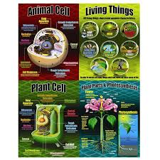 amazon com mcdonald publishing life science poster set mc p077
