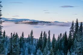 scenic view of foggy forest free stock photo