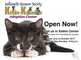 humane society black friday kitten kaboodle adoption center open now willamette humane society