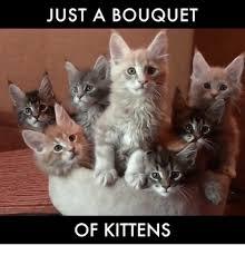 Kittens Memes - 25 best memes about kittens kittens memes