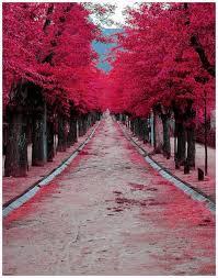 dreams leaves pink tree image 441736 on favim