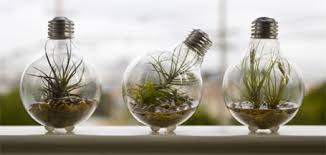 terrariums glass bottle ideas u2013 universal scribbles