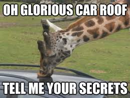 Giraffe Meme - new funny giraffe meme graphics wishmeme