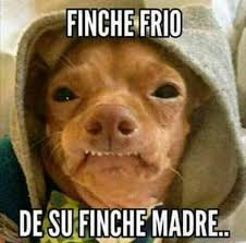 Tuna The Dog Meme - pin by acenet salinas on pensamiemtos frases y memes pinterest