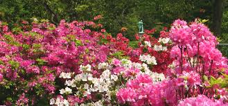 azalea garden party silent auction on may this yearly event raises