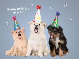 happy birthday singing bd dogs sing happy birthday