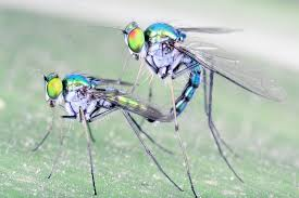 how to find a mate after 50 50 shades of wrong disturbing insect wired