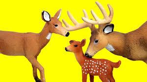 deer family baby deer deer and their deer