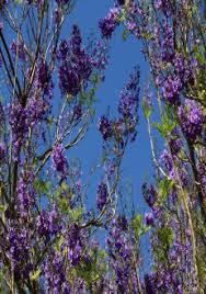 winter flowering trees shrubs for south florida miami