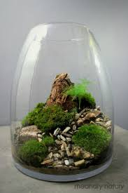 101 best mini garden images on pinterest terrarium ideas mini