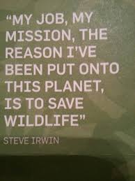 steve irwin saved wildlife and so should you everyone has a
