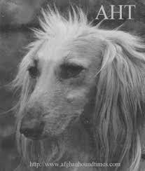 us afghan hound afghan hound times site entry index page