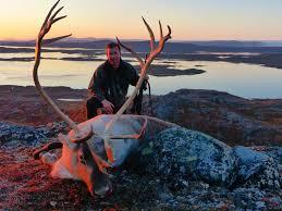 reindeer hunting greenland lax á hunting