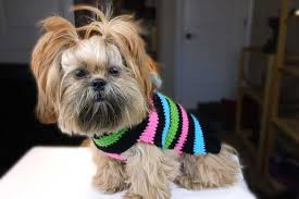cute crochet dog sweater for beginners crochet dog sweater pattern