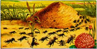 ants in the garden benefits of ants the old farmer u0027s almanac