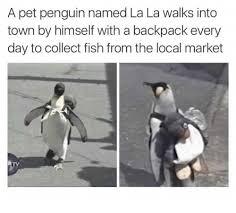 Penguin Memes - 25 best memes about penguin penguin memes