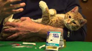 dog and cat nail caps soft paws youtube