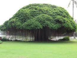 different types of trees 25 different types of trees and their uses styles at life
