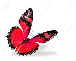 butterfly no color popular butterfly to color cool coloring