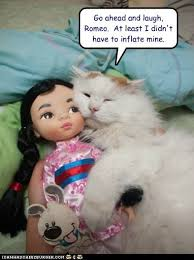 Blow Up Doll Meme - lolcats blow up doll lol at funny cat memes funny cat pictures