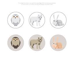 arctic animals camouflage activity gift of curiosity