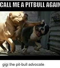 Pitbull Meme - call me a pitbull again gigi the pit bull advocate meme on me me