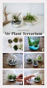 swellmayde fai da te fai da te pinterest air plants