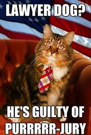 Dog Lawyer Meme - lawyer dog is guilty of purrrr jury jlml lawyer humor
