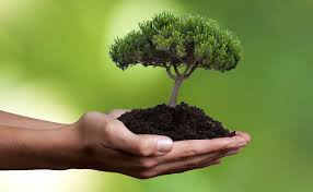 seed today tree tomorrow philosophy karmic ecology