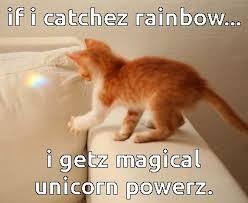 Unicorn Rainbow Meme - cat unicorn meme unicorn best of the funny meme