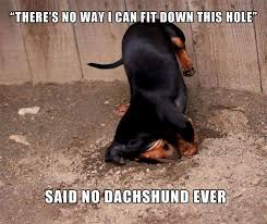 how to stop dogs digging archives doxie fan club