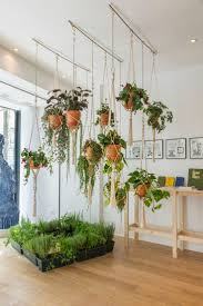 floor plant hanging plants from ceiling hanging clay pots hanging planter with
