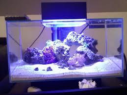 fluval edge marine light 6 gallon fluval edge reef sanctuary