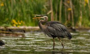 feeding wild birds wilderness awareness