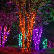amber mini led christmas lights peaceful ideas amber led christmas lights mini color 100 chritsmas decor