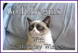Birthday Meme Cat - happy birthday memes with funny cats dogs and cute animals