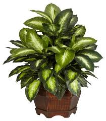 silk plants golden dieffenbachia silk plant traditional artificial plants