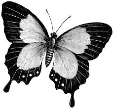 butterfly drawings butterfly clipart etc black and white