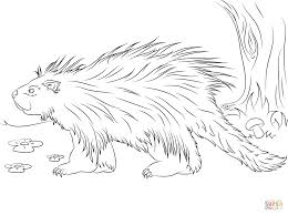cute porcupine coloring page free printable coloring pages