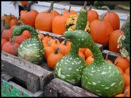 goose gourds goose gourds by autumncat dpchallenge