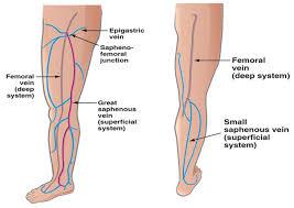 Foot Vascular Anatomy Varicose Veins Treatment And Surgery Los Angeles California